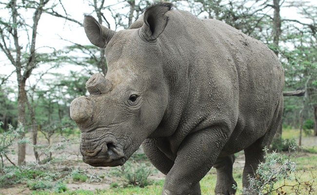How Tinder Is Playing A Role In Trying To Save A Rhino From Extinction