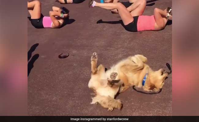 Watch: This Dog Working On His Abs Is All The Inspiration You Need