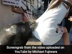 Video Shows Terrifying Moment A Sea Lion Yanked Girl Into Water