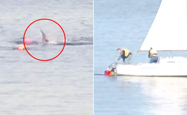 Great White Shark Attacks Kayak, Knocks Man Into Water In Chilling Video