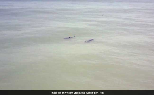 'You Are Paddle-Boarding Next To 15 Great White Sharks,' Chopper Announced