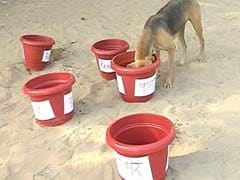 #PledgeABowl: Mumbai Group Starts Initiative To Serve Water To Strays