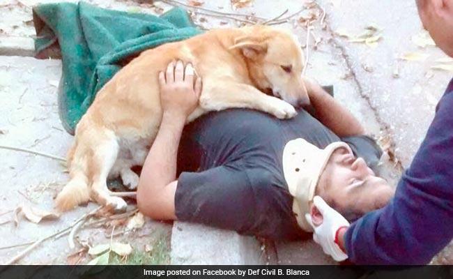 Viral: Dog Refuses To Leave Injured Owner's Side Until Help Arrives