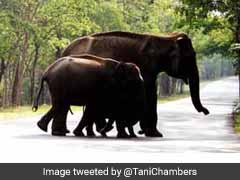 41 Elephants Die In Kerala's Forests In 6 Months