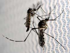 Gujarat Officials Knew Of First Zika Case For Months But Kept It Quiet