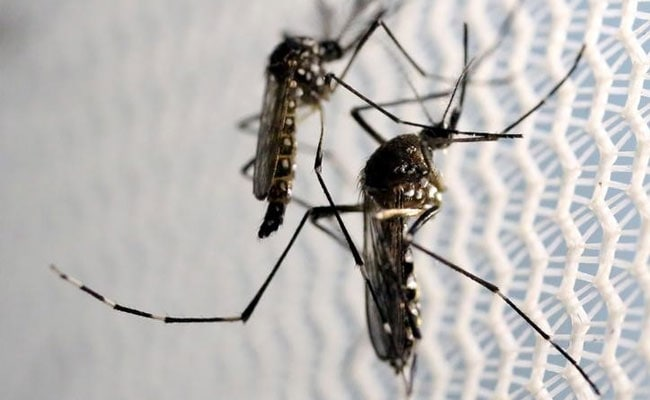 Health Officials Say Threat Of Zika Low In NC This Summer