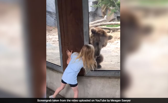 Watch: Grizzly Bear Plays Peek-A-Boo With Little Girl
