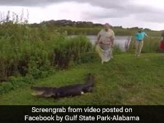 Caught On Camera: Dramatic Capture Of 8-Foot-Long Alligator