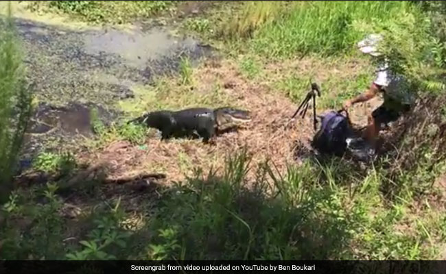 Angry Alligator Snaps At Photographer Who Gets Too Close For Comfort