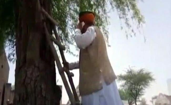 सिग्नल नहीं मिला तो पेड़ पर चढ़ गए मोदी सरकार के मंत्री, जानें फिर क्या हुआ