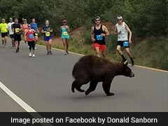 Bizarre Moment Bear Dashes Past Stunned Runners During A Race