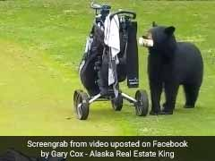 Watch: Hungry Bear Interrupts Golf Game, Steals Snacks, Leaves