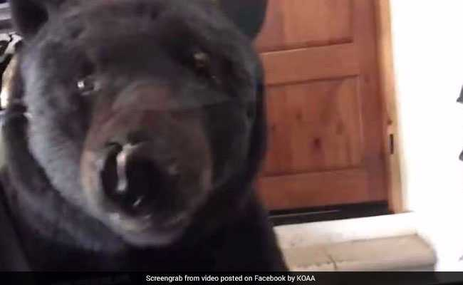 Bear encounter caught on camera prompts warning from officials
