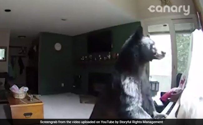 Piano-playing bear raids Vail apartment