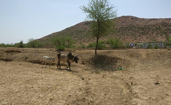 bundelkhand farmer