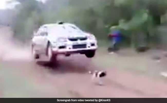 कुत्ते को बचाने के लिए किया ऐसा स्टंट, Video देखकर दांतों तले दबा लेंगे उंगलियां
