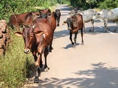 Cattle Lifter Injured In Encounter With Police In Greater Noida