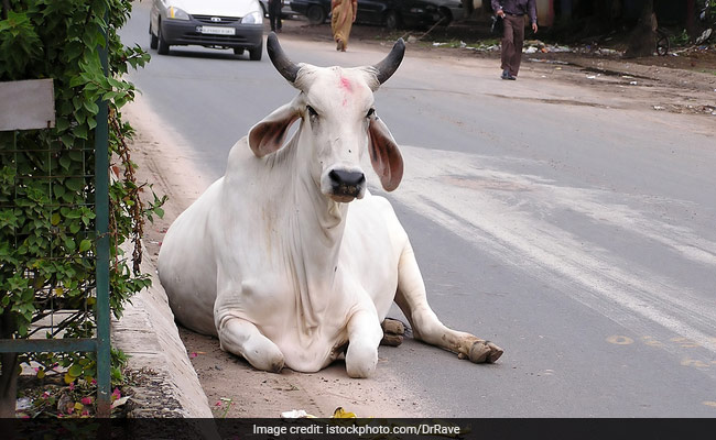Lynching In The Name Of Cow Protection Against Hindutva: Shiv Sena