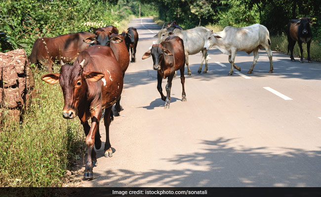 File Police Complaints On Violence In The Name Of Cow Protection, Centre Tells States