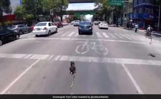 Cyclist Saves Runaway Dog From Busy Road In High Drama Chase