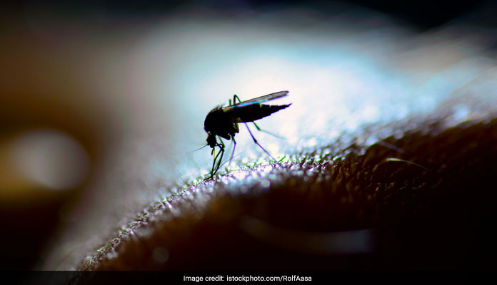 Tips To Prevent Dengue: Dengue And Chikungunya On A Steady Rise
