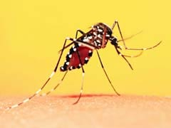 Dengue And Viral Fever Upsurge In Kerala