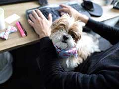 For These Lucky Techies, It's Bring Your Dog To Work Day Every Day