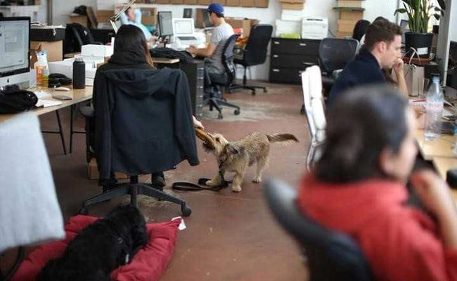 For Some Californians, It's Bring Your Dog To Work Day Every Day