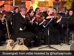 Viral: Dog Wanders Onstage As Orchestra Plays, Wins Hearts Everywhere