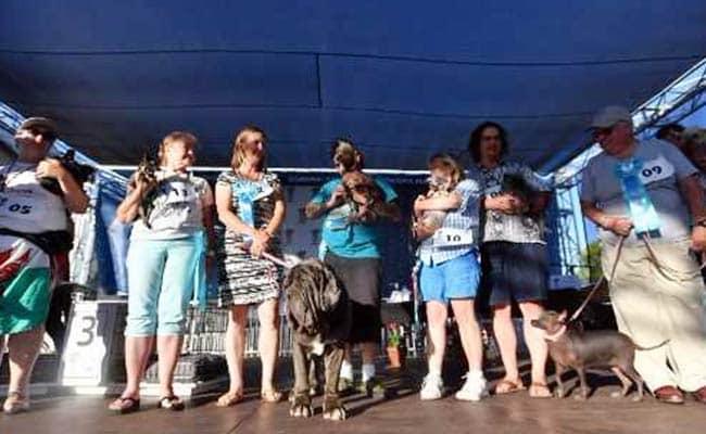 dog show 650