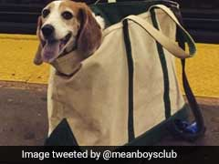 New York Subway Bans Dogs, Unless They Fit In A Bag. Do These Pups Qualify?