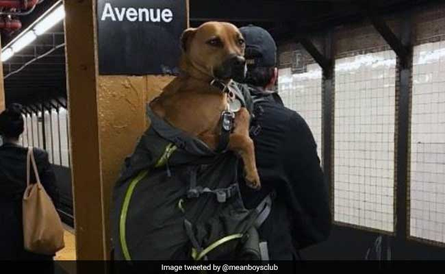 dogs on subway