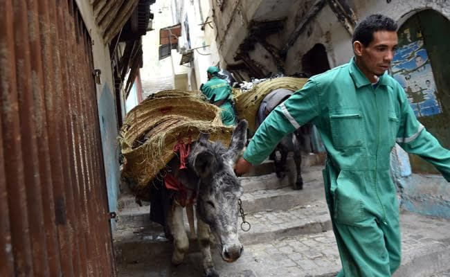 Donkeys At Dawn: A Rubbish Job In The Algiers Kasbah