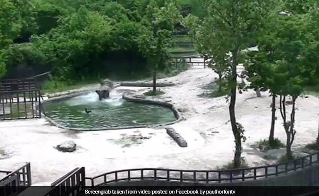 Baby Elephant Falls Into Water. Watch What Older Members Of Herd Do