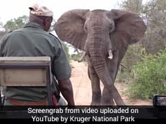 Elephant Comes Dangerously Close To Safari. Watch What Happens Next