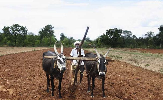 Rich Farmers Likely To Be Excluded From Loan Waiver In Maharashtra