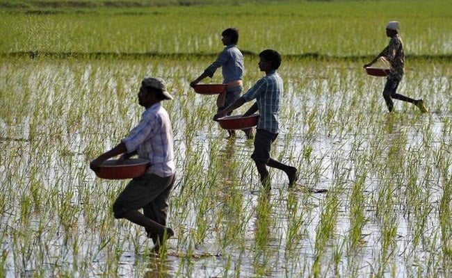 Farmers To Get Crop Loans At Subsidised 7%, Aadhaar Link A Must