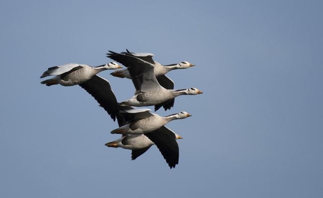 Flock Of Geese Poop On 17 Guests At Disneyland