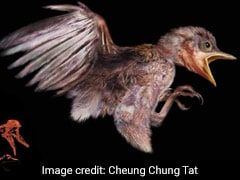Stunning Fossil Reveals Prehistoric Baby Bird Caught In Amber