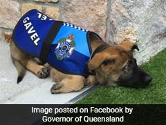 Pup Fails Police Dog Academy, But Wait, There's A Happy Ending