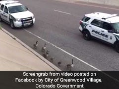Police Escort Delivers Family Of Geese To Safety From Busy Highway