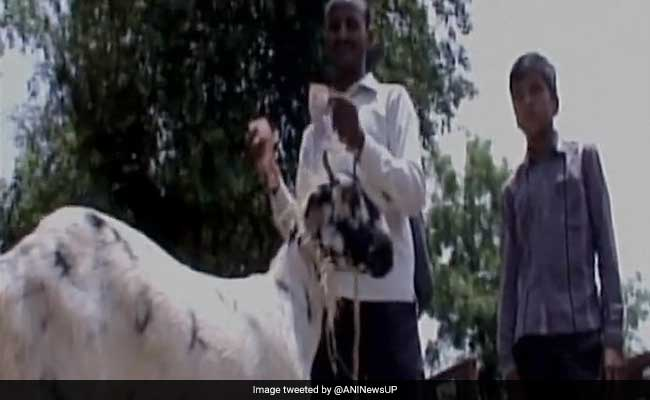 Hungry Goat Eats Owner's Currency Notes Worth Rs 62,000 In Uttar Pradesh
