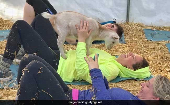 goat yoga 650