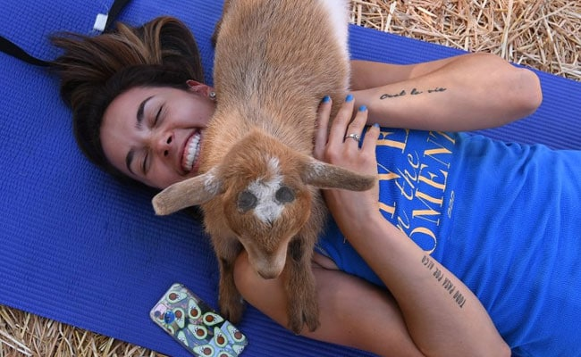 goat yoga woman afp