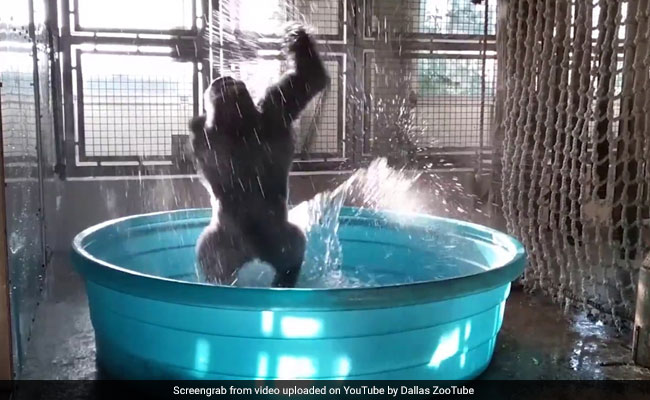 Happy Gorilla Dancing Like No One Is Watching Will Make Your Saturday