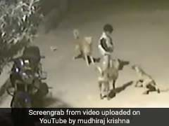 Hyderabad Boy Stands Up To Four Stray Dogs. Video Is Viral