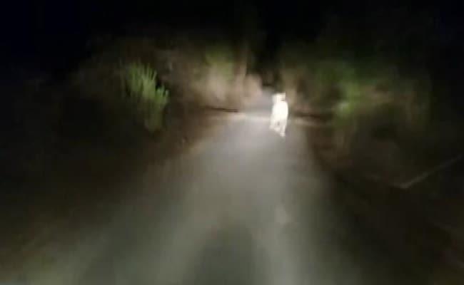 Video: गुजरात के बब्बर शेर के साथ दरिंदगी, तेज दौड़ाओ, भले ही मर जाए...