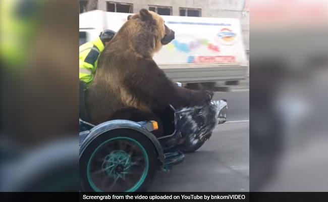 भालू को हुई शराब पीने की इच्छा! VIDEO में देखें कहां पहुंच गया