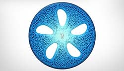Michelin's Visionary Concept Tyres Are 3D Printed And Organic