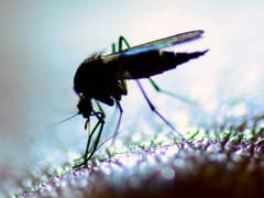 Uttar Pradesh Health Department To Observe Every Sunday As 'Anti-Mosquito Dry Day'
